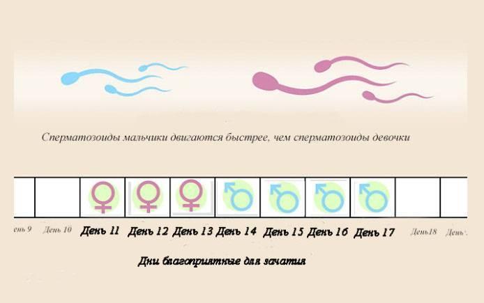 Можно ли забеременеть после овуляции: через сколько происходит зачатие, когда наступает оплодотворение, какие шансы на следующий день или через неделю, как узнать?