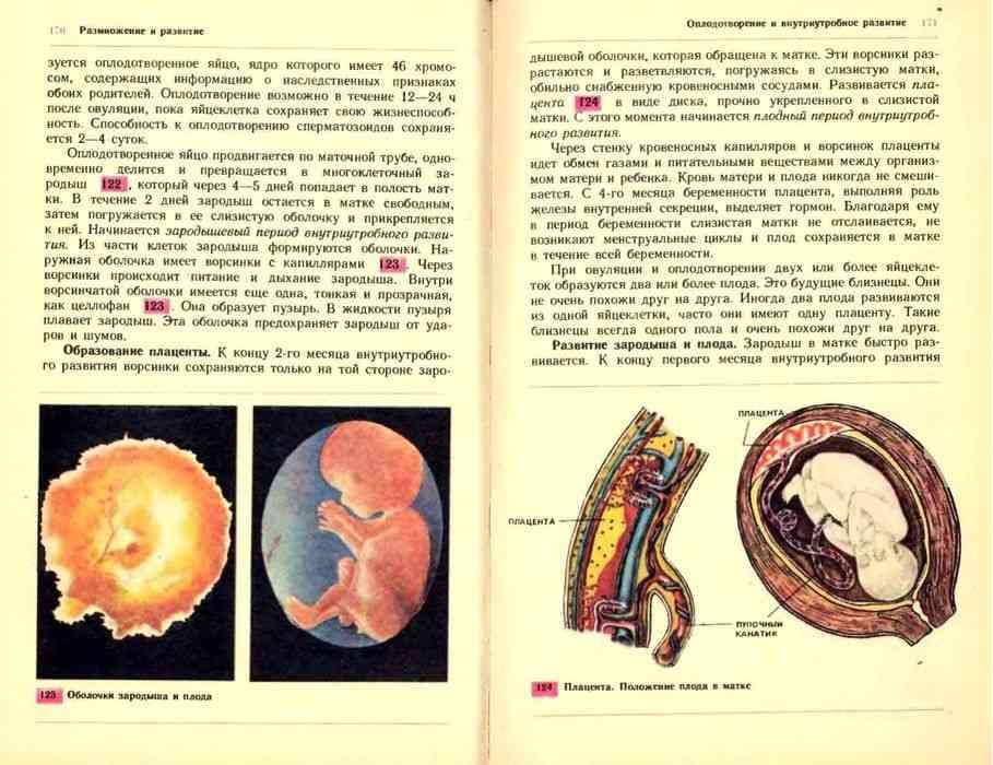 Плацента и степени ее зрелости - наблюдение беременности.  здоровье