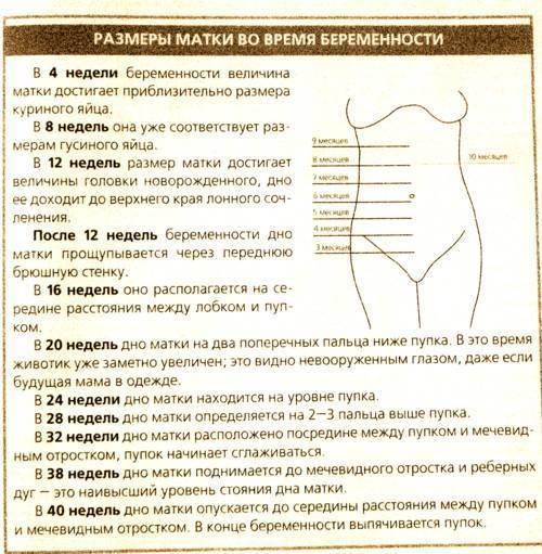 Живот во время беременности: это интересно и полезно знать!, стук матки во время беременности   метки: рост, фото, расти, беременный