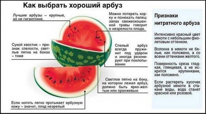 Дыня при грудном вскармливании: можно ли, отзывы, комаровский, в первый, второй месяц, 5 месяцев, противопоказания
