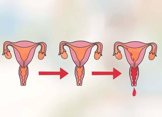 Как рассказать девочке про месячные и объяснить суть менструации (мультик)