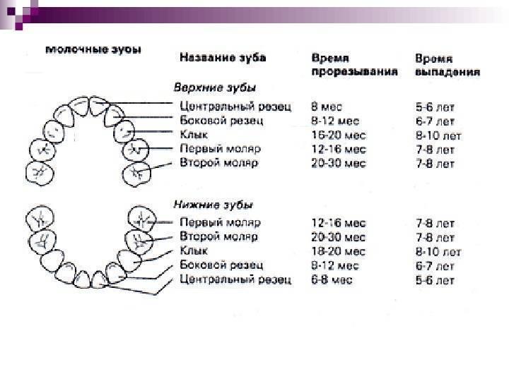 Молочные зубы у детей: сроки, очередность, схема и порядок прорезывания