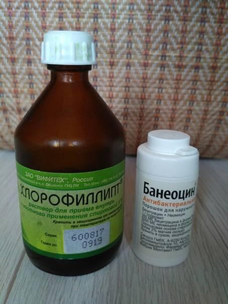 Для чего нужен хлорофиллипт грудничку