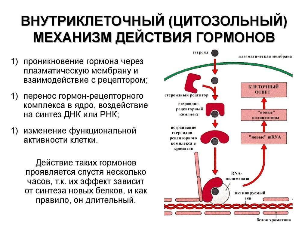 Лечение высокого уровня тгт и пролактина