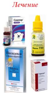 Аденоиды у детей: лечение в домашних условиях народными средствами