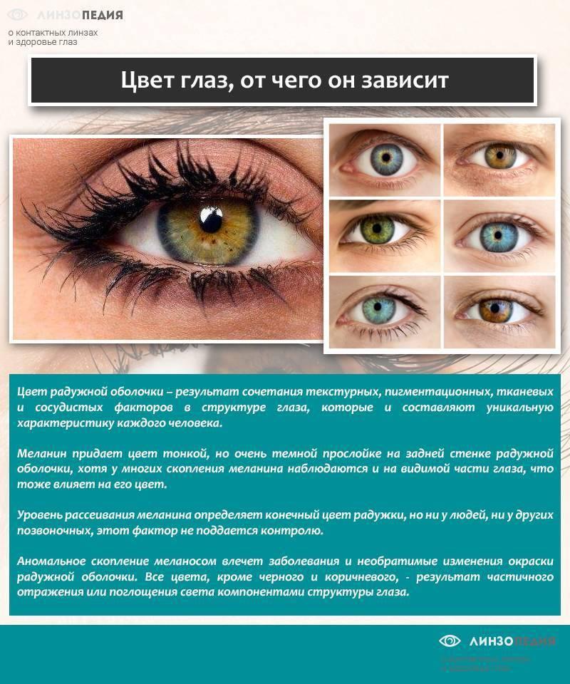 Цвет глаз у новорожденных детей: как и почему он меняется