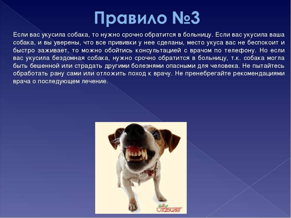 Прививка от укуса собаки что нельзя делать