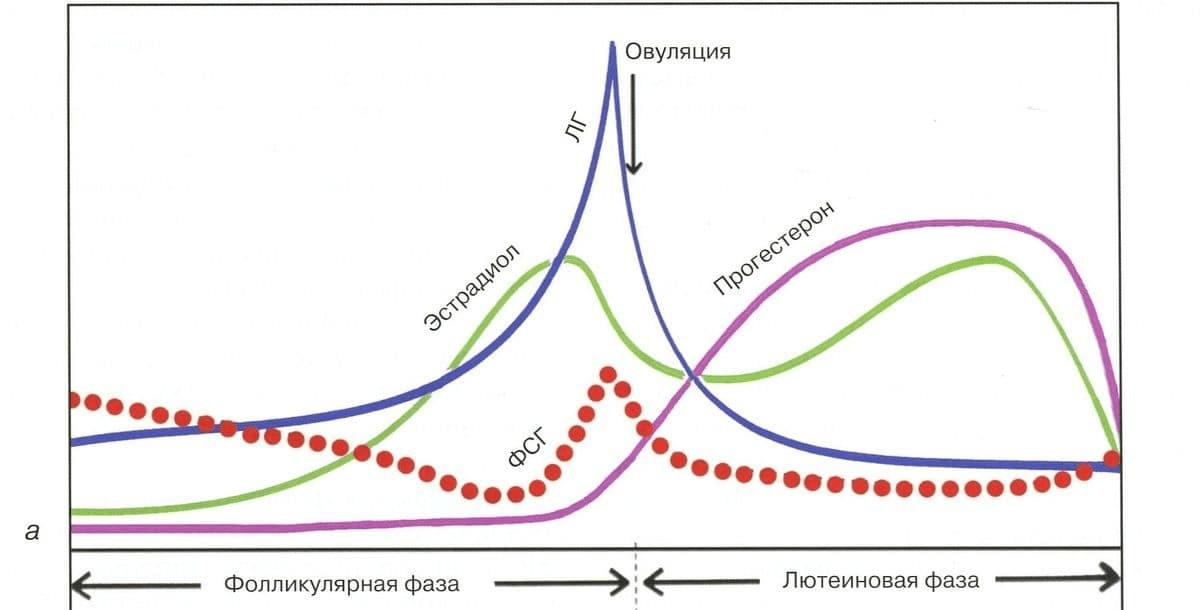 Прогестерон – общие понятия о биохимии, функции, показателях нормы и влиянии гормонального дисбаланса на организм