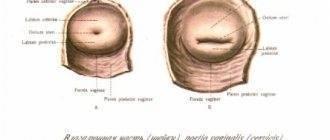 Положение матки после зачатия - здоровый ребенок
