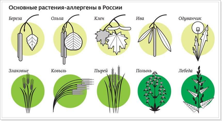 Симптомы аллергии у ребенка на цветение и пыльцу растений, методы лечения