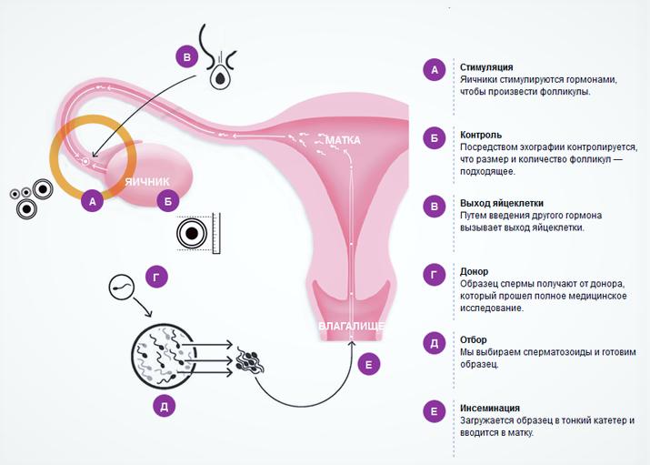 Стимуляция яичников для планирования беременности народными средствами