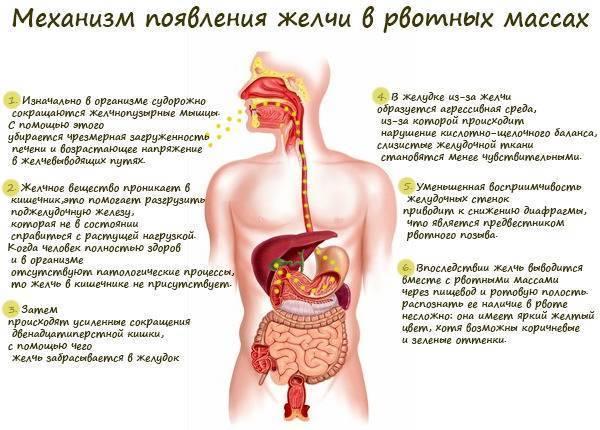 Как запустить желудок ребенку после рвоты