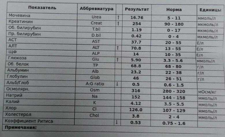 Алт аст норма (биохимический анализ крови): показатели, у взрослых, что означает, о чем говорят, ммоль л, биохимия