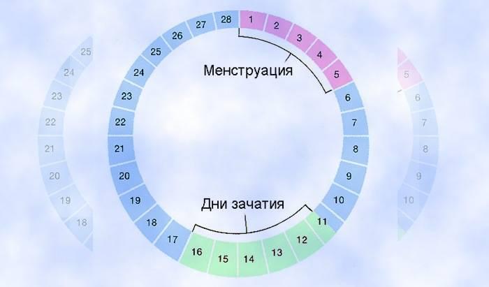 Фазы менструального цикла: когда наступают 1 и 2 стадии месячных?