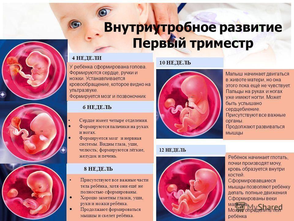 5 способов узнать пол будущего ребенка – научных и не очень. на каком сроке определяют пол ребенка