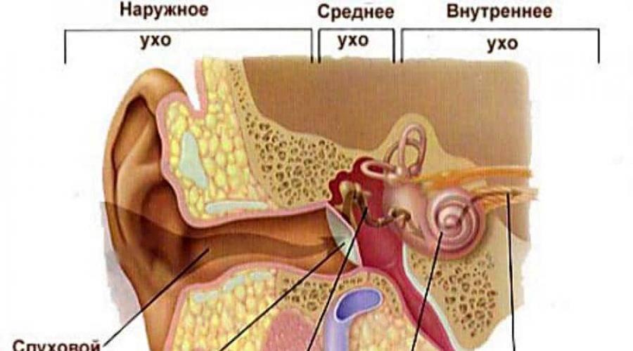 Что делать если в уши новорожденному попала вода - медицинский справочник medrese-rt.ru
