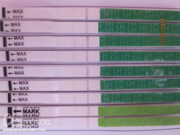 Тест на беременность и тест на овуляцию — в чем отличия, особенности использования