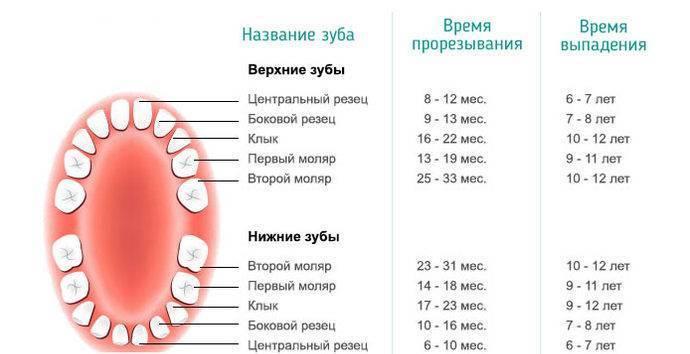 Какие молочные зубы меняются у ребенка на постоянные