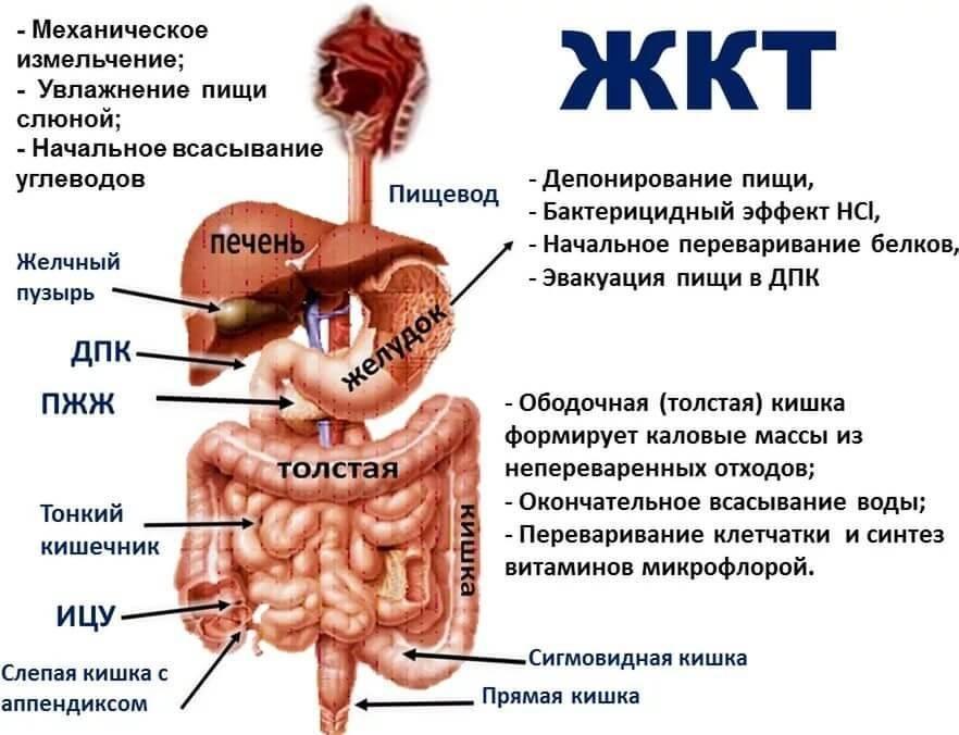 Воспаление кишечника у ребенка: виды, последствия и лечение