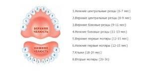 Температура при прорезывании зубов у детей до и после года: сколько может держаться
