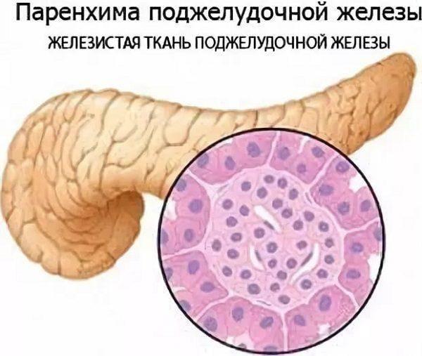 Причины реактивных изменений печени и поджелудочной железы у ребенка