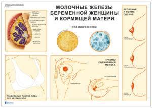 Соски при беременности: изменение цвета, чувствительности
