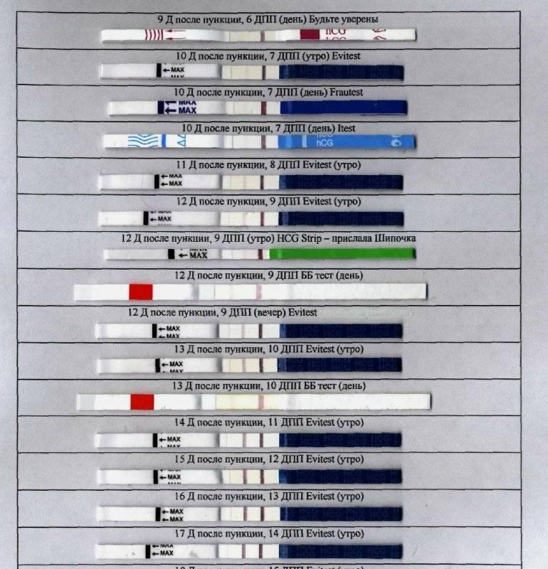 Перенос эмбрионов при эко: имплантация, тест, ощущения и выделения, таблица изменения хгч после переноса / mama66.ru