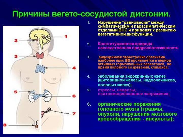 Вегето сосудистая дистония симптомы и лечение у подростков