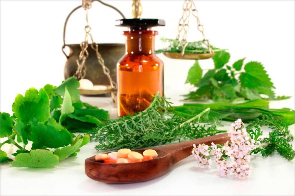 Лекарственные травы для лечения сухого и влажного кашля