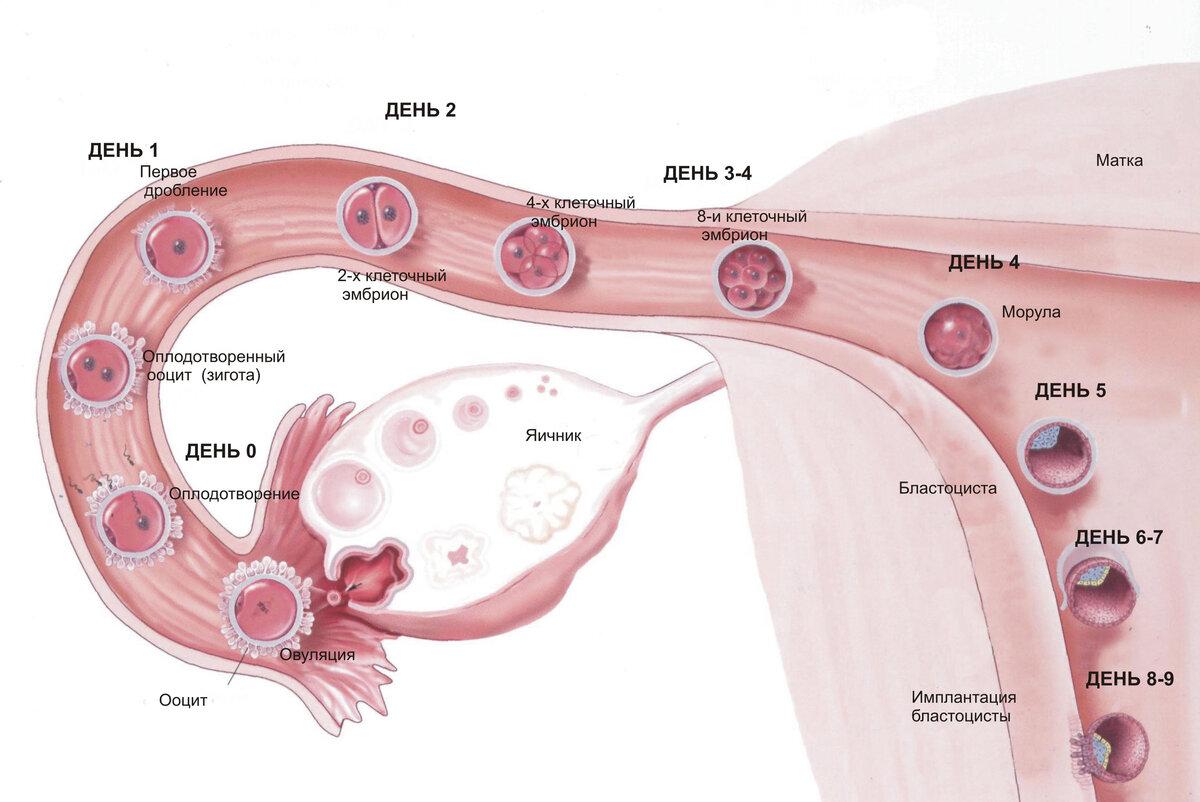 Как быть: можно ли забеременеть с кистой яичника?