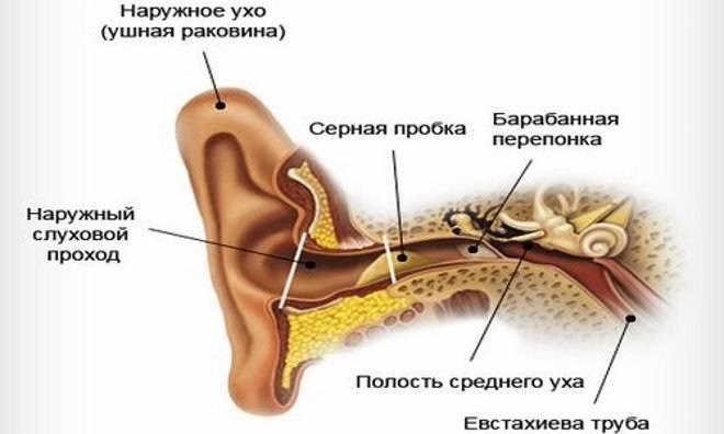 Почему у ребенка в ушах много серы темного цвета: причины и способы устранения проблемы