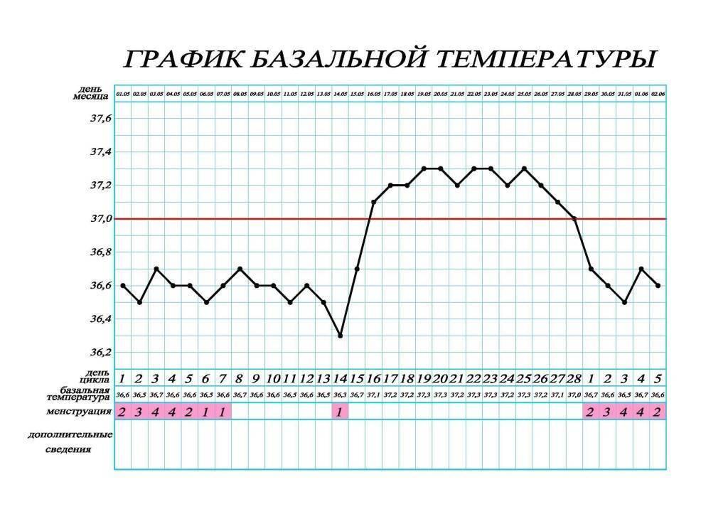 Базальная температура при беременности на ранних сроках: определение и график. ректальная температура при беременности