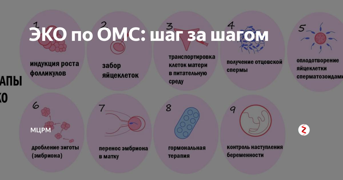Как получить квоту на эко по омс: документы и порядок. беременность в помощью эко