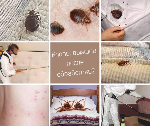 Как выглядят укусы клопов на коже детей: описание, симптомы, фото и видео