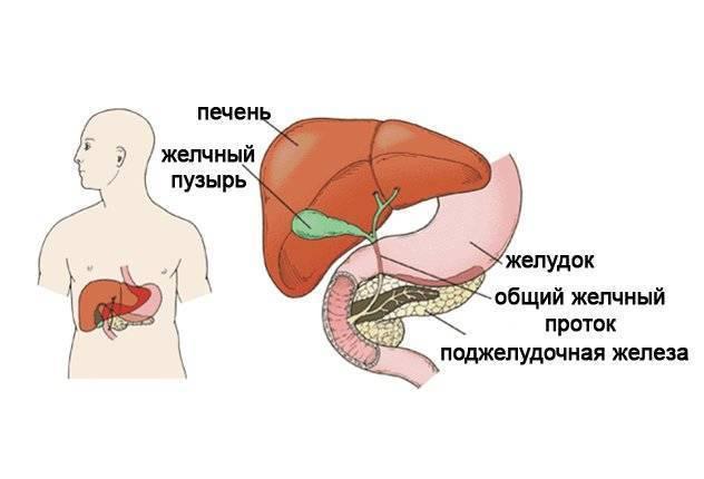 Реактивные изменения поджелудочной железы у ребенка в 4 года