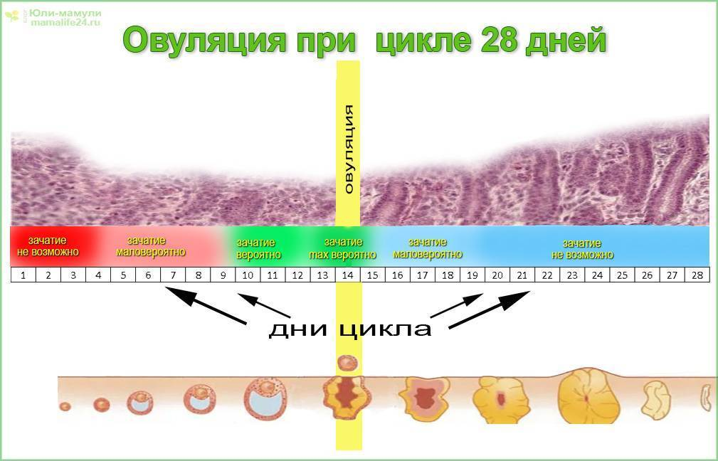 Выделения при зачатии после овуляции: какими они могут быть?