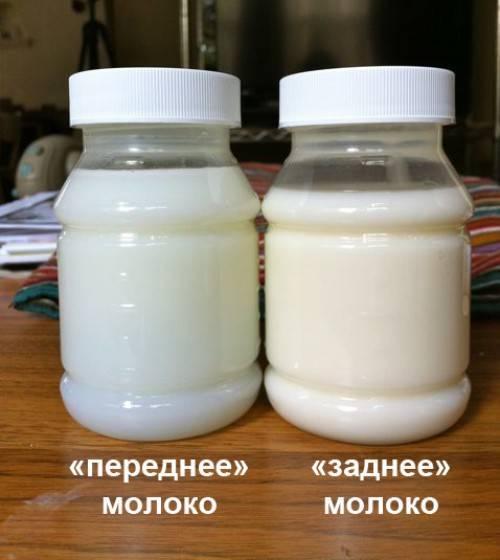 Грудное молоко зеленого цвета почему