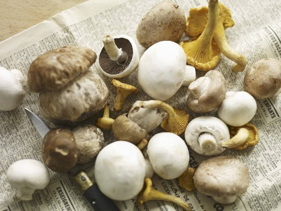Почему нельзя грибы при грудном вскармливании. все о шампиньонах при грудном вскармливании и принципах вкусного питания кормящей маме на заметку