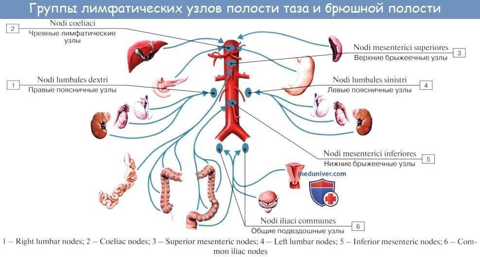 Лимфоузлы в кишечнике у ребенка — причины воспаления