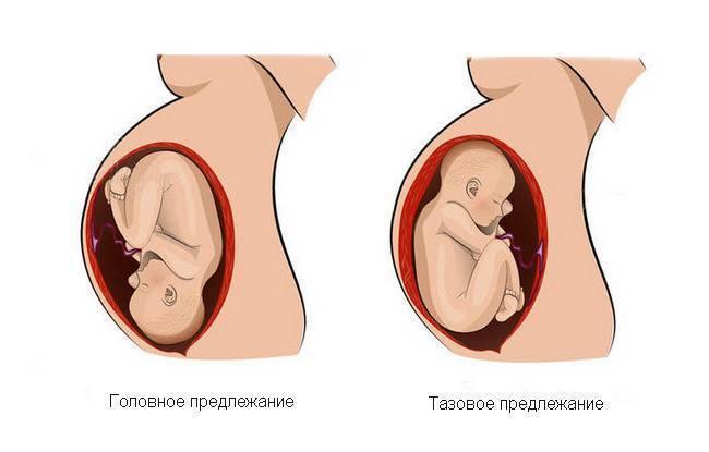 Развитие плода по неделям беременности: вес, рост, расположение, описание этапов развития плода