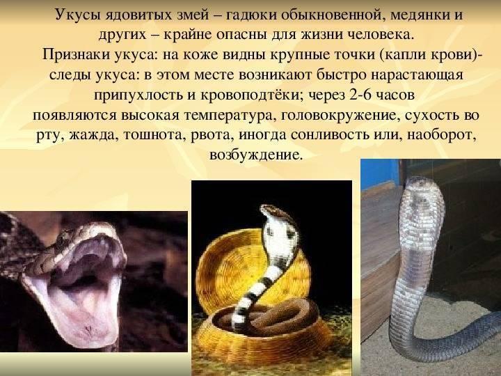 Укус гадюки: действие яда на человека, первая помощь, лечение, последствия, фото
