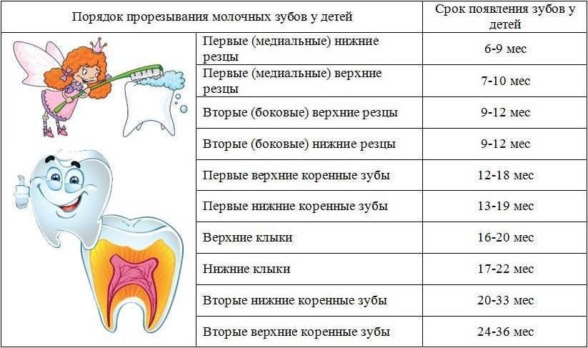 Температура при прорезывании зубов у детей: симптомы, сколько дней длится высокая температура