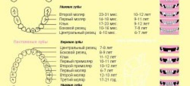 Смена молочных зубов на постоянные у детей: схема, сроки и порядок замены