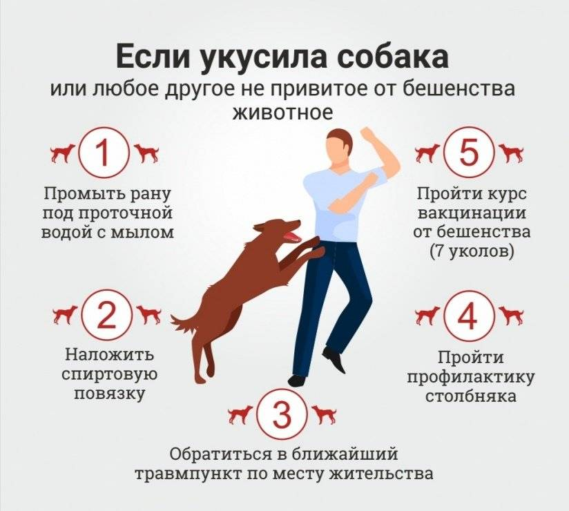 Столбняк: симптомы у человека после укуса собаки и его лечение.