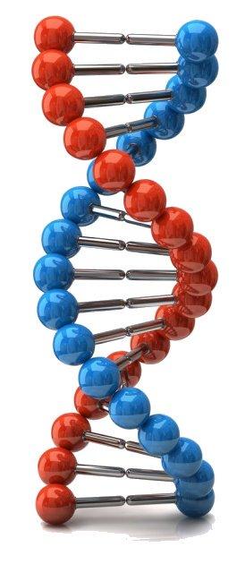 Исследование фрагментации днк в сперматозоидах