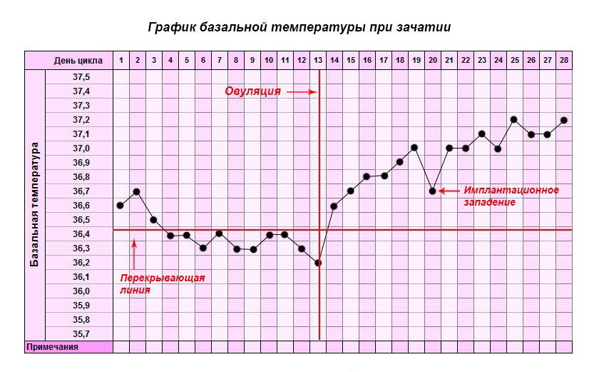 Тонкий эндометрий: причины патологии, вероятность беременности, лечение
