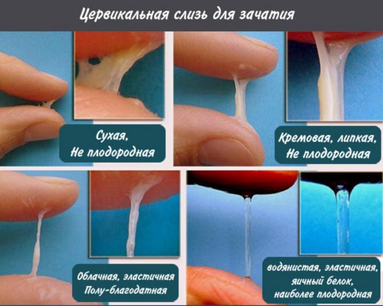 Можно ли забеременеть от спермы на пальце?