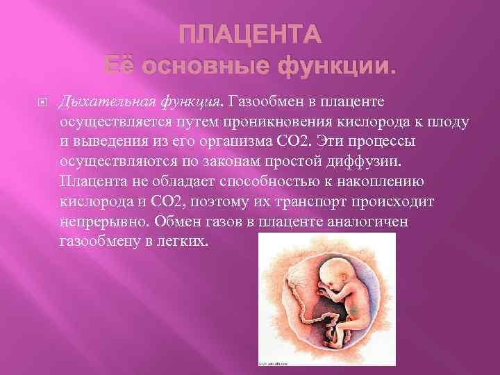 Когда формируется плацента при беременности — сроки и особенности процесса