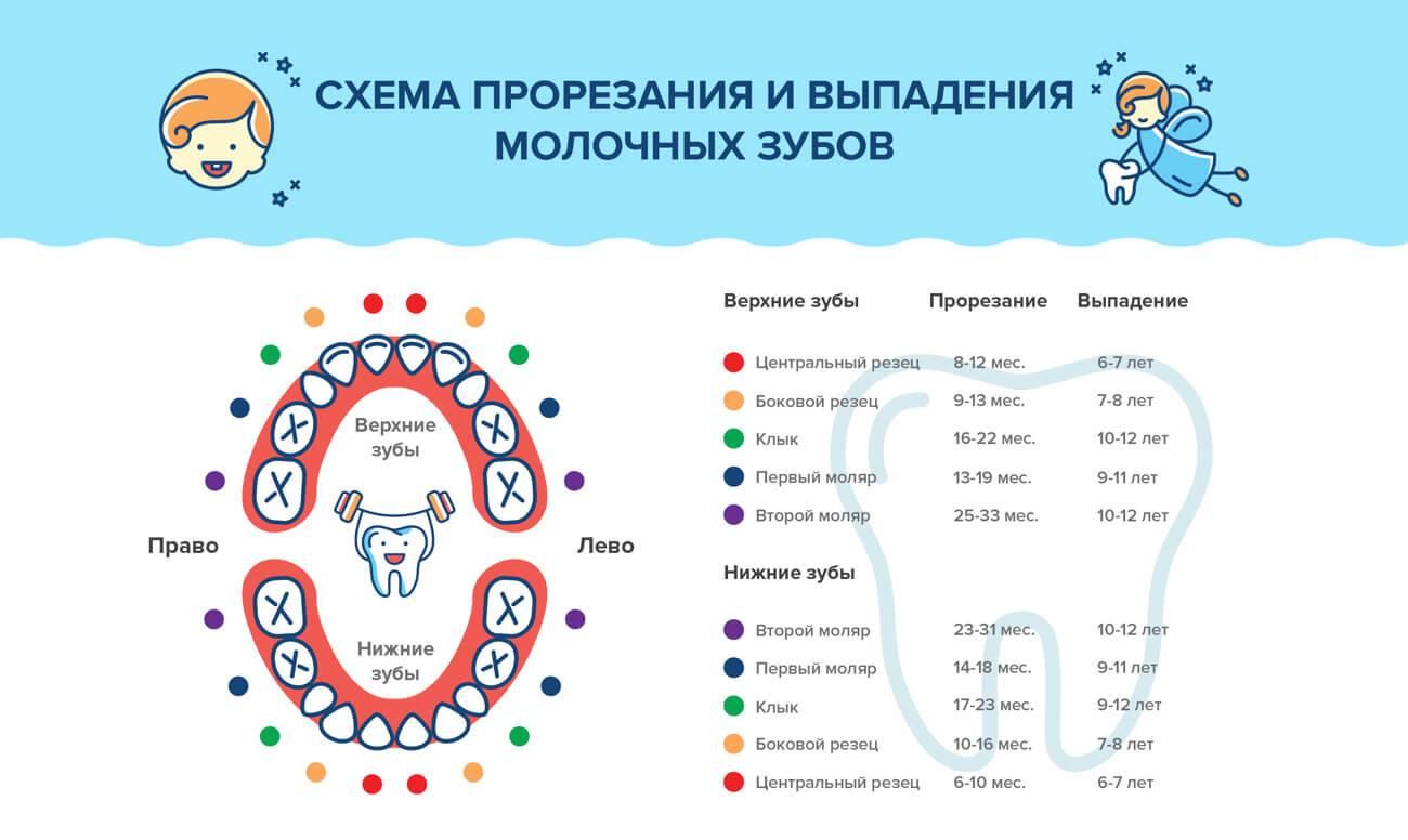 Во сколько месяцев прорезываются первые зубы у детей и в какой последовательности