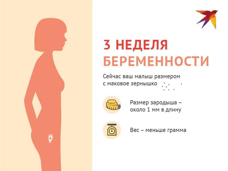 3 неделя беременности: что происходит – календарь